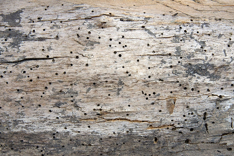 Woodworm Treatment in Poole